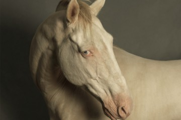 Marie-Cecile-Thijs-Horse-with-the-Blue-Eyes